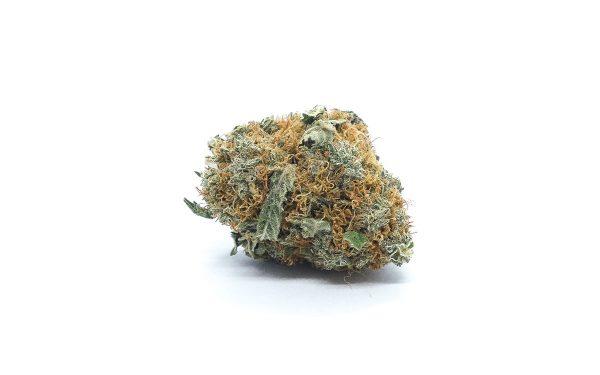 white cookies marijuana strain
