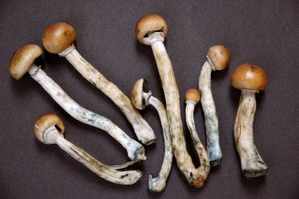 how to grow magic mushrooms